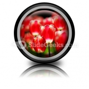 Red Tulips PowerPoint Icon Cc