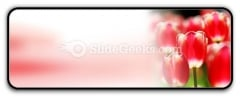 Red Tulips PowerPoint Icon R