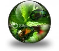 Shiny Beetles PowerPoint Icon C