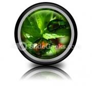 Shiny Beetles PowerPoint Icon Cc