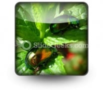 Shiny Beetles PowerPoint Icon S