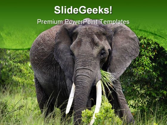African Elephant Animals PowerPoint Backgrounds And Templates 0111