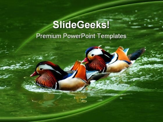 Awesome Colored Ducks Animals PowerPoint Templates And PowerPoint Backgrounds 0211