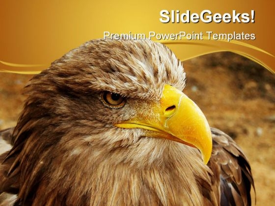 Bald Eagle Animal PowerPoint Themes And PowerPoint Slides 0411