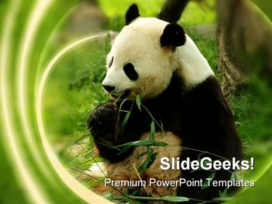 Bear Animals PowerPoint Themes And PowerPoint Slides 0211