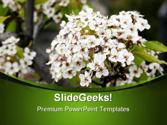 Beautiful White Flowers Nature PowerPoint Templates And PowerPoint Backgrounds 0311