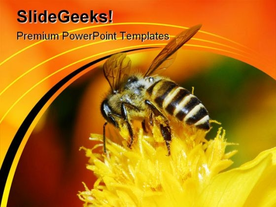 Bee And Flowers Nature PowerPoint Themes And PowerPoint Slides 0211