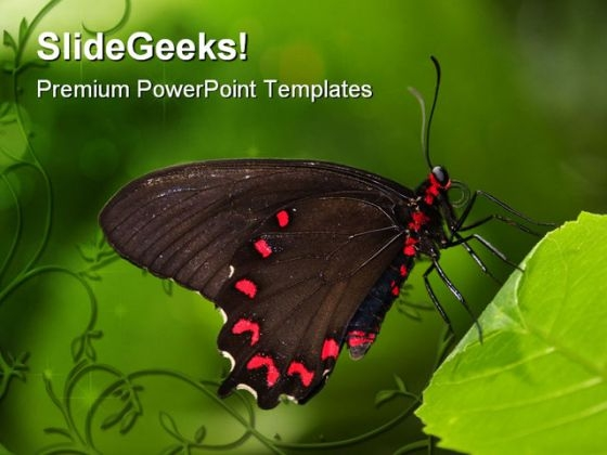 Black Swallowtail Butterfly Animals PowerPoint Templates And PowerPoint Backgrounds 0211