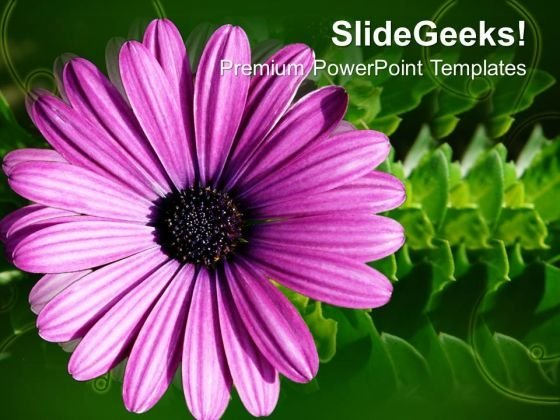 Blooming Gerbera Flower Beauty PowerPoint Templates Ppt Backgrounds For Slides 0213