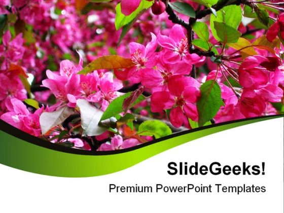 Blossoming Pink Flowers Beauty PowerPoint Templates And PowerPoint Backgrounds 0311