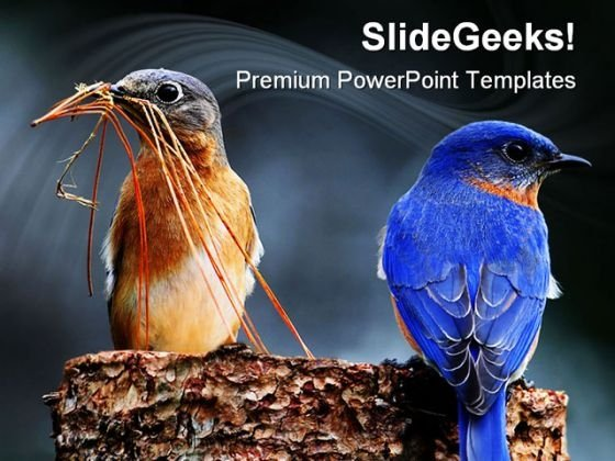 Blue Birds Animals PowerPoint Templates And PowerPoint Backgrounds 0111