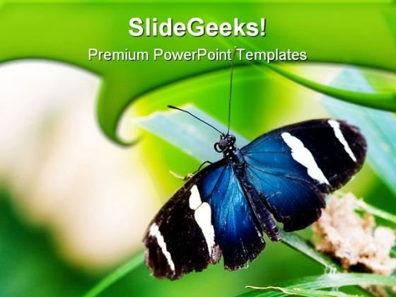 Blue Butterfly Animals PowerPoint Themes And PowerPoint Slides 0511