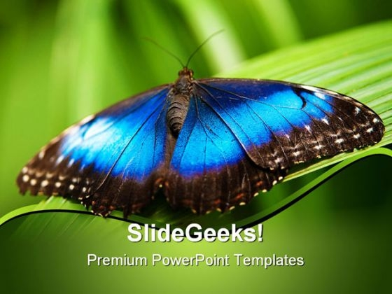 Blue Morpho Butterfly Beauty PowerPoint Templates And PowerPoint Backgrounds 0211