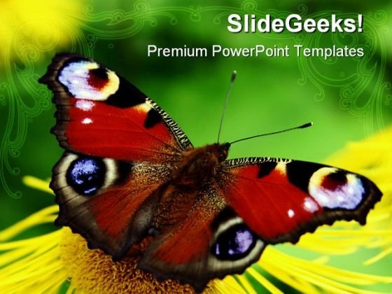 Butterfly Animals PowerPoint Templates And PowerPoint Backgrounds 0211
