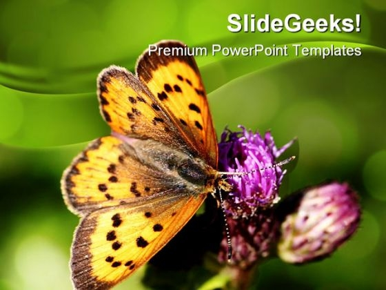Butterfly Nature PowerPoint Themes And PowerPoint Slides 0211