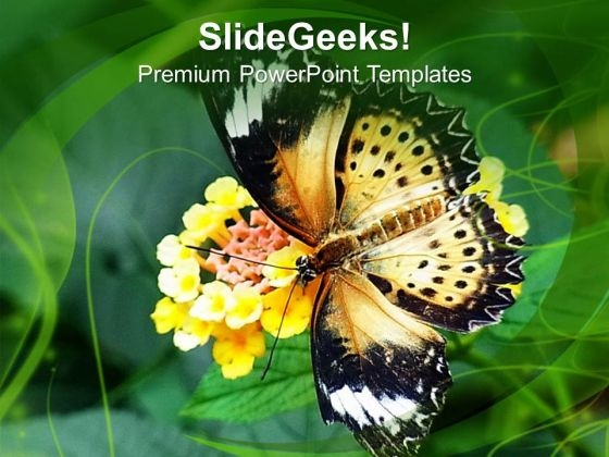 Butterfly on flower background nature theme powerpoint templates ppt butterflyonflowerbackgroundnaturethemepowerpointtemplatespptbackgroundsforslides0613title toneelgroepblik Images