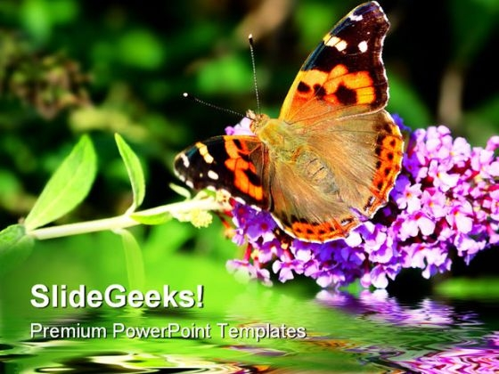 Butterfly On Flower Beauty PowerPoint Themes And PowerPoint Slides 0211