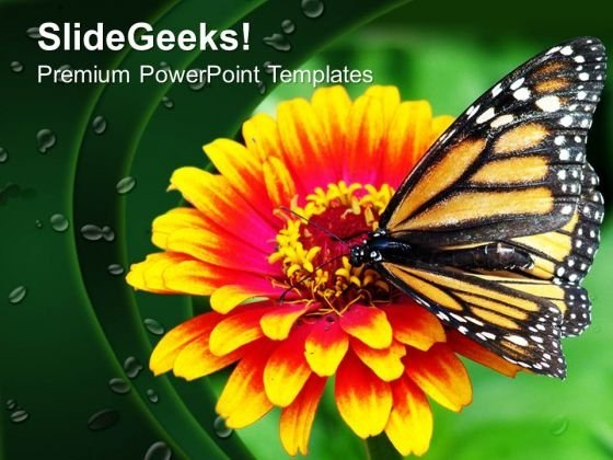 Butterfly On Flower Garden Nature PowerPoint Templates Ppt Backgrounds For Slides 0213