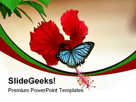 Butterfly On Hibiscus Animals PowerPoint Templates And PowerPoint Backgrounds 0211