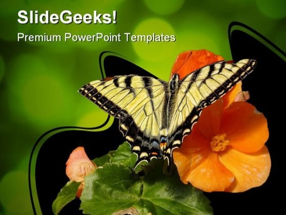 Butterfly On Orange Flower Animals PowerPoint Templates And PowerPoint Backgrounds 0111