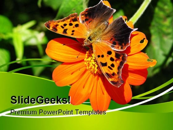 Butterfly On Orange Flower Nature PowerPoint Themes And PowerPoint Slides 0611