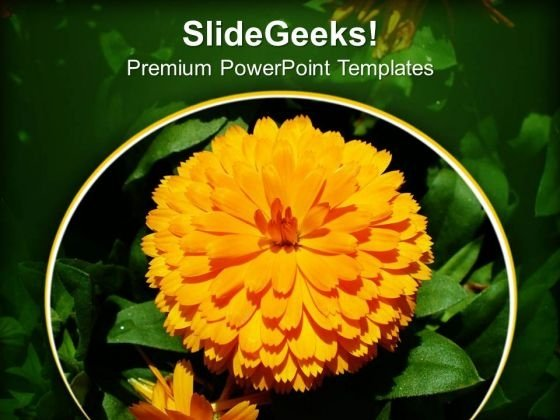 Calendula PowerPoint Templates Ppt Backgrounds For Slides 0413