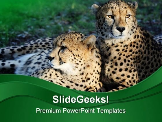 Cheetah Wild Cats Animals PowerPoint Templates And PowerPoint Backgrounds 0211