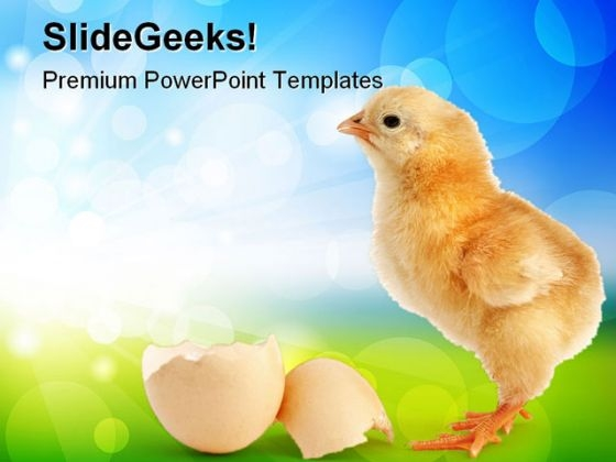 Chick New Born Animals PowerPoint Themes And PowerPoint Slides 0511