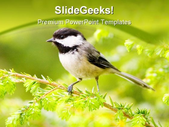 Chickadee Animals PowerPoint Themes And PowerPoint Slides 0211