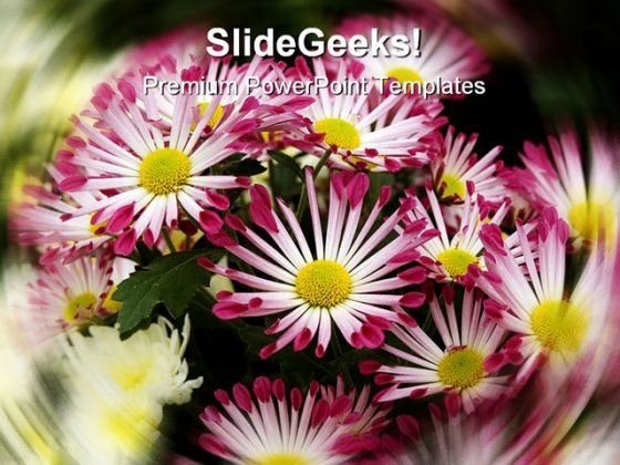 Chrysanthemums Nature PowerPoint Templates And PowerPoint Backgrounds 0311