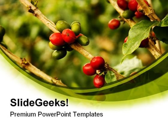 Coffee Plants Nature PowerPoint Templates And PowerPoint Backgrounds 0311