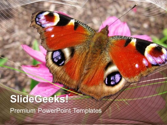Colored Butterfly Beauty PowerPoint Templates And PowerPoint Themes 0512