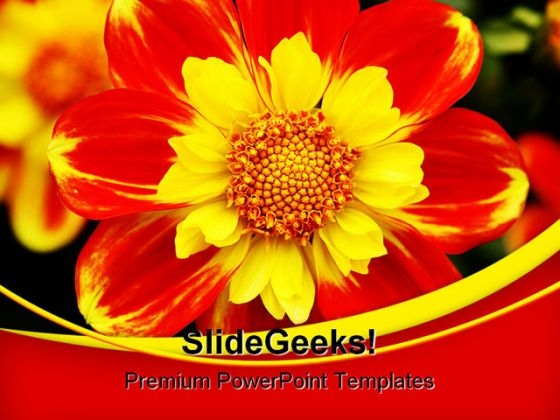 Dahlia Beauty PowerPoint Templates And PowerPoint Backgrounds 0311