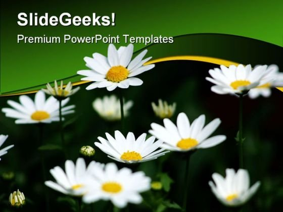Daisies Nature PowerPoint Templates And PowerPoint Backgrounds 0311
