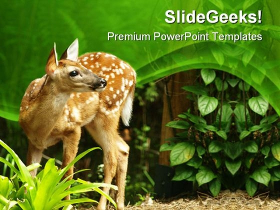 deer animals powerpoint templates and powerpoint backgrounds 0411, Modern powerpoint