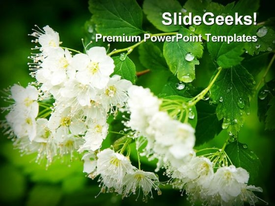 Dew Drops On White Flowers Beauty PowerPoint Themes And PowerPoint Slides 0311