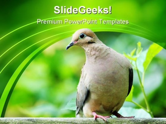 Dove Zenaida Animals PowerPoint Templates And PowerPoint Backgrounds 0111