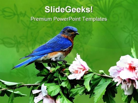 eastern blue bird animals powerpoint templates and powerpoint, Modern powerpoint