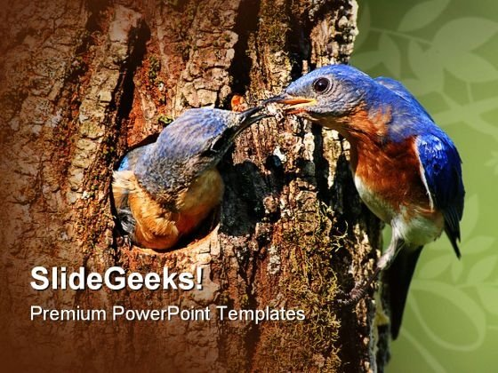 Eastern Bluebirds Nature PowerPoint Templates And PowerPoint Backgrounds 0111