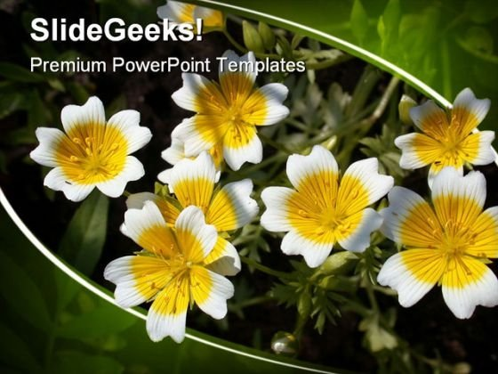 Flower Nature PowerPoint Templates And PowerPoint Backgrounds 0311