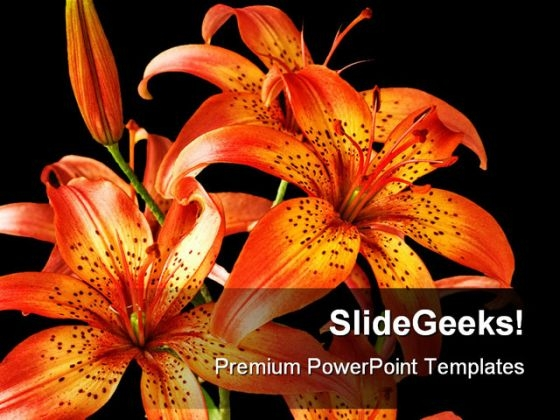 Flowers Lily Beauty PowerPoint Backgrounds And Templates 1210