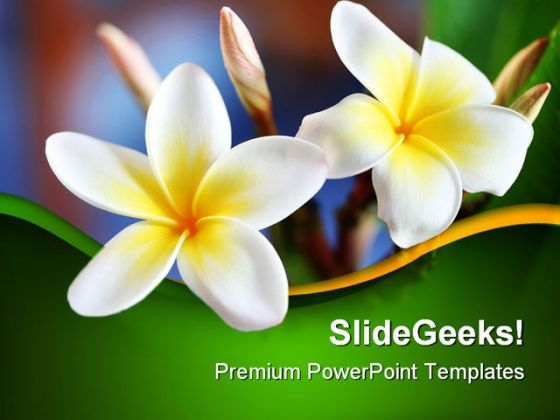 Frangipani Flower Beauty PowerPoint Templates And PowerPoint Backgrounds 0311