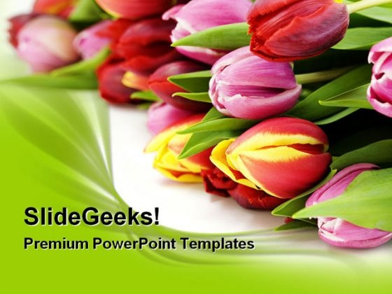 Fresh Tulip Flowers Beauty PowerPoint Templates And PowerPoint Backgrounds 0311