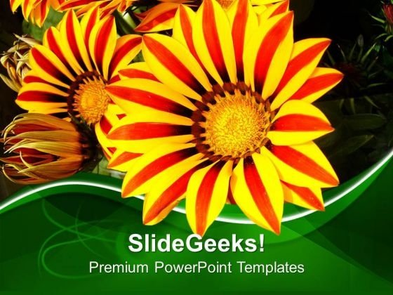 Gazanias Flowers Green Background PowerPoint Templates Ppt Backgrounds For Slides 0613