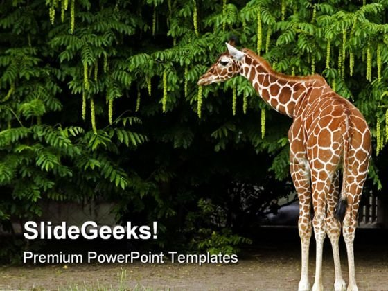 giraffe animals powerpoint templates and powerpoint backgrounds, Modern powerpoint