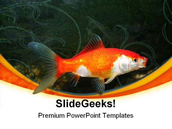 Golden Fish01 Animals PowerPoint Templates And PowerPoint Backgrounds 0211
