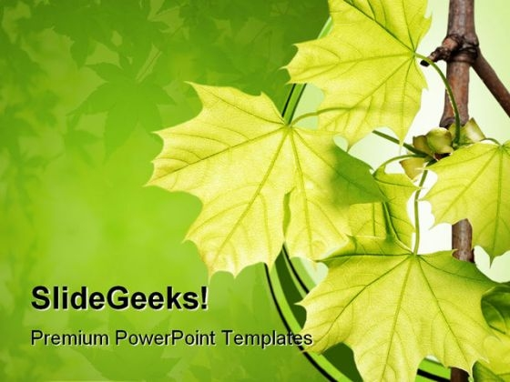 Green Maple Leaves Nature PowerPoint Themes And PowerPoint Slides 0511