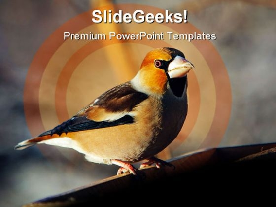 Grosbeak Perched Animals PowerPoint Templates And PowerPoint Backgrounds 0511