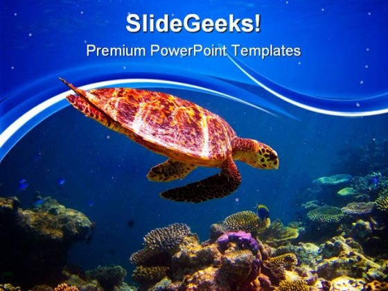 Hawksbill Turtle Swimming Animals PowerPoint Templates And PowerPoint Backgrounds 0511