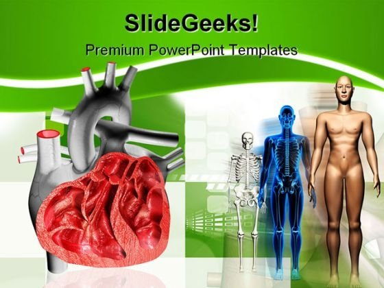 Heart Human Medical PowerPoint Backgrounds And Templates 1210